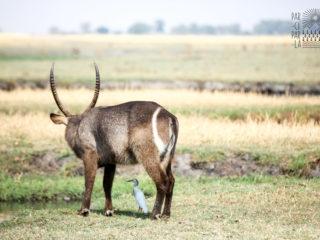 tente de toit trekking oryx 2